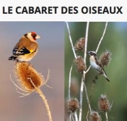 AMAP_LeCabaretdesOiseaux