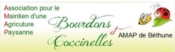 AMAP_Bourdons_et_coccinelles