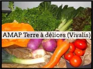 AMAP_Terre_a_delices_Vivalis