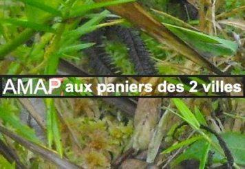 AMAP_Auxpaniersdes2villes