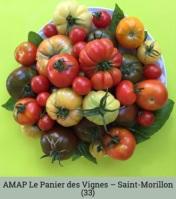 AMAP_LePanierdesVignes_Saint-Morillon-33