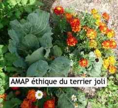 AMAP_du_Terrier-joli