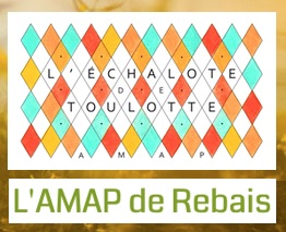 AMAP_de_Rebais_L-Echalotte-de-Toulotte