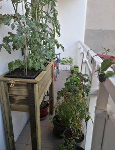Jardiniere_pieds_de_tomates-20200519