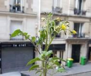 Tomates_Dumas_2_260520